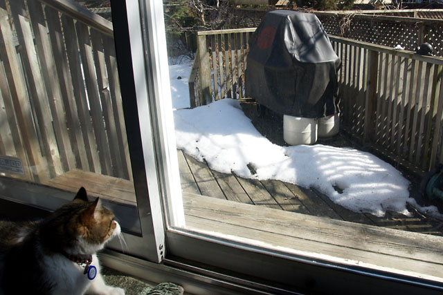 Waiting for the snow to melt
