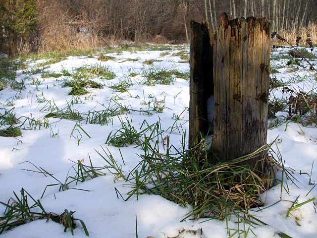 Stump of an old telephone pole in the oxbow marsh