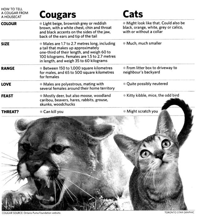 cougars online chat uusikaupunki