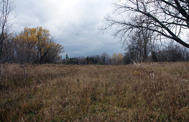 Meadow southwest of Passmore & Littles