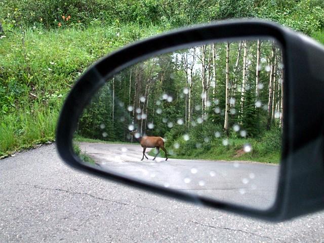 elk-in-the-mirror-3542f
