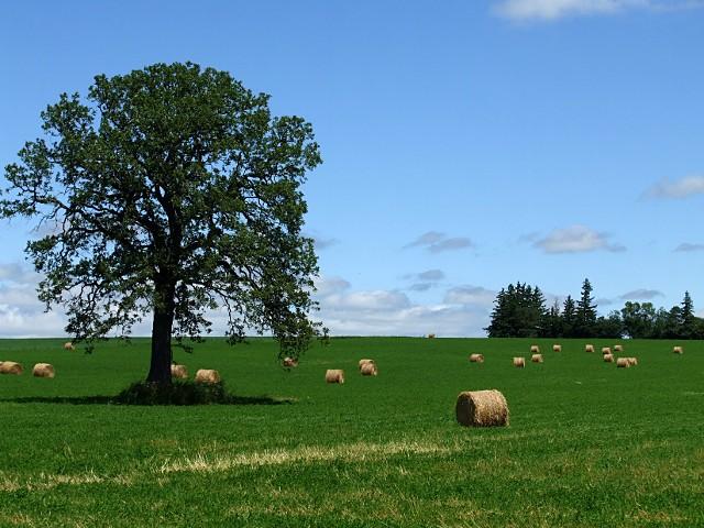 hay-field-3423f
