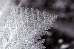Feather ice detail