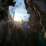 Sunset through a hollow tree stump