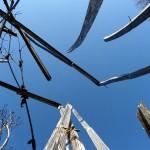 Woody stems piercing the sky