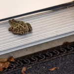 A frog at the door