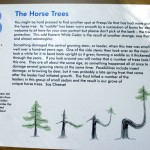 Horse tree info board