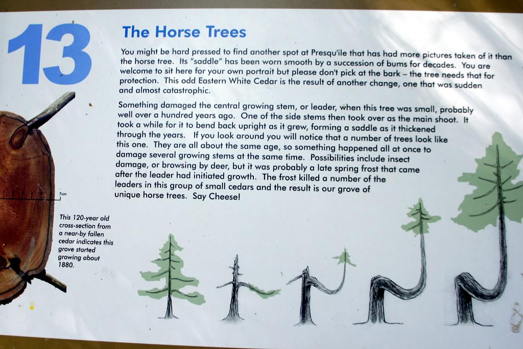 Horse Trees Dodgeville