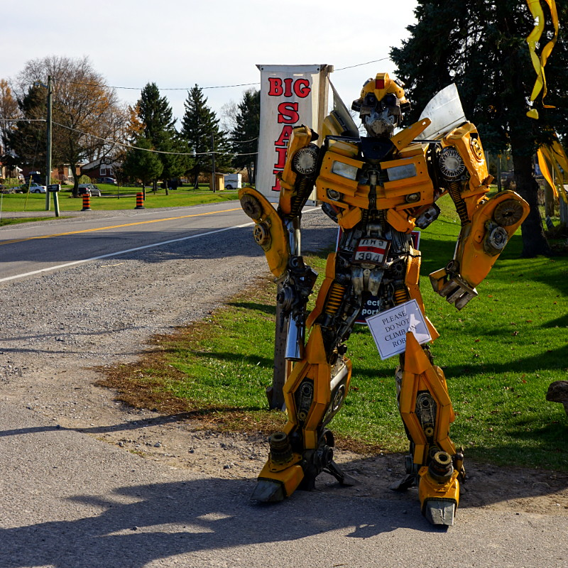 Bumblebee guards the road