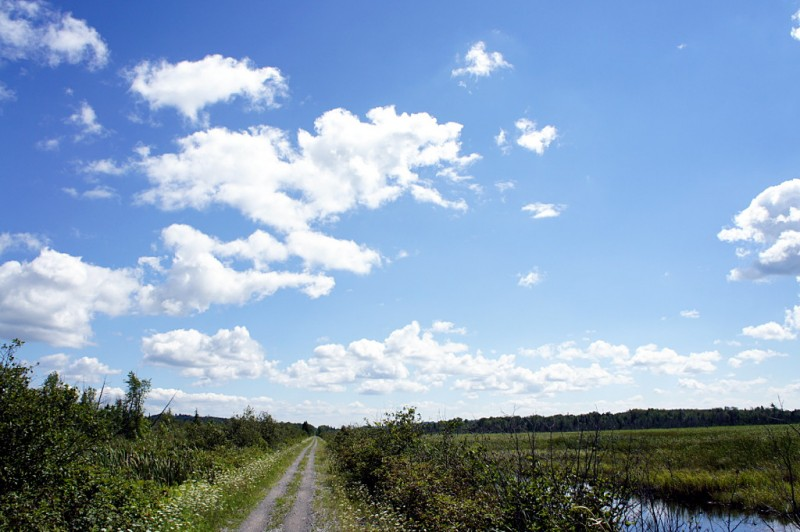 A wetland view from the Lindsay to Bethany rail trail.