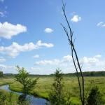 The landscape opens up on a spectacular wetland closer to Bethany.