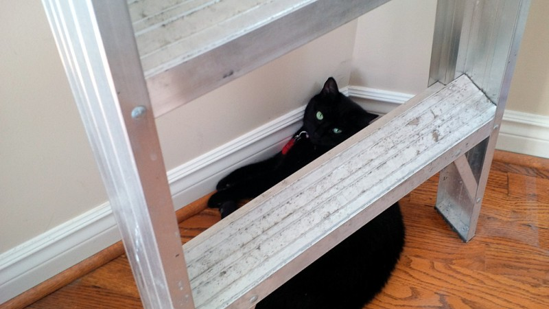 black-cat-under-a-ladder-324